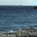 """""""Io sto con la sposa"""": Intervista ad Antonio Augugliaro e Tasnim Fared"""
